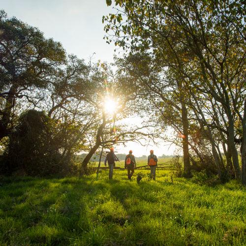 Three hunters walking in a bright, green field