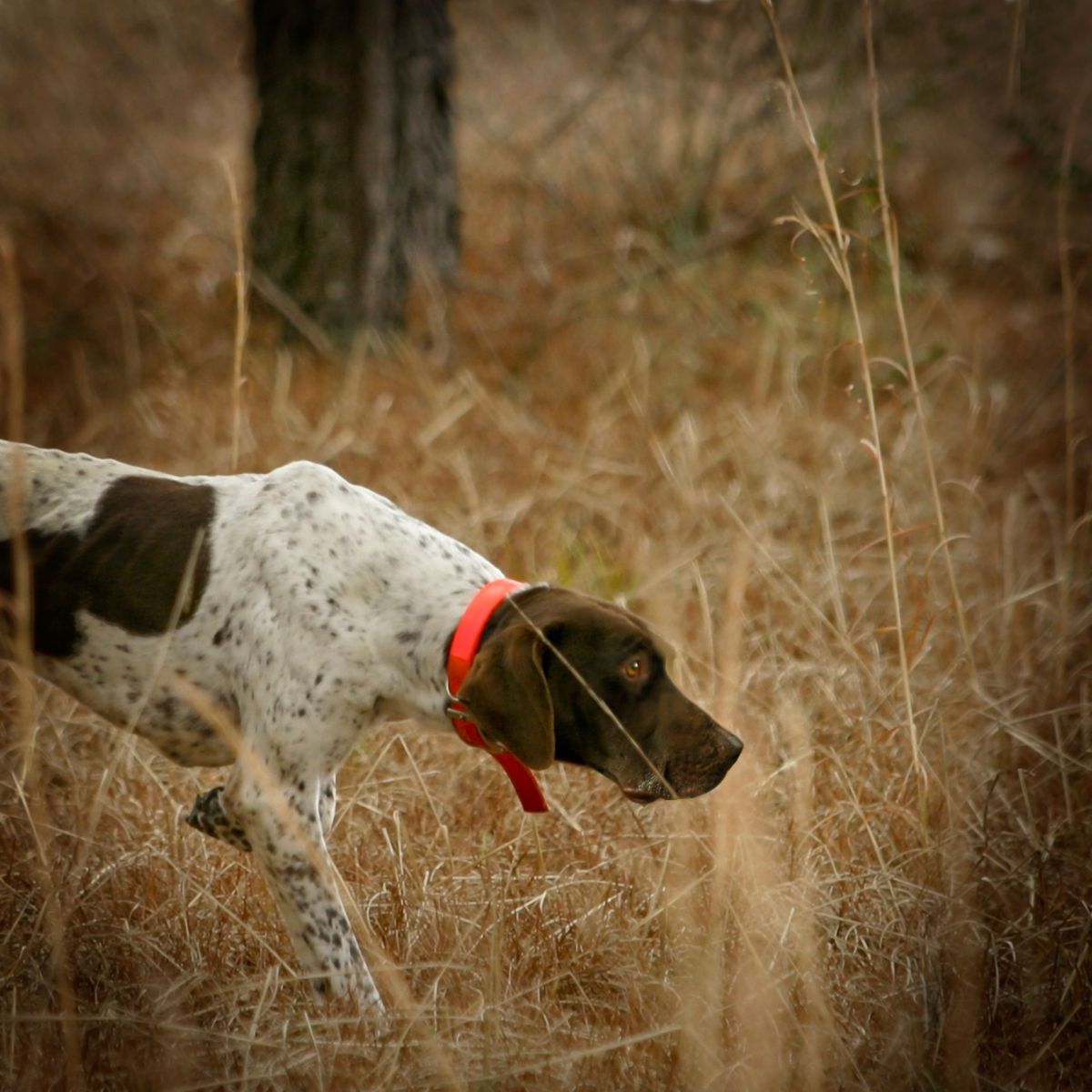 Orvis Two-Day Quail School at Pursell Farms - image number 0
