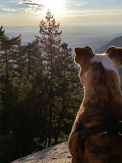 The back of a dog's head looking at a mountain view