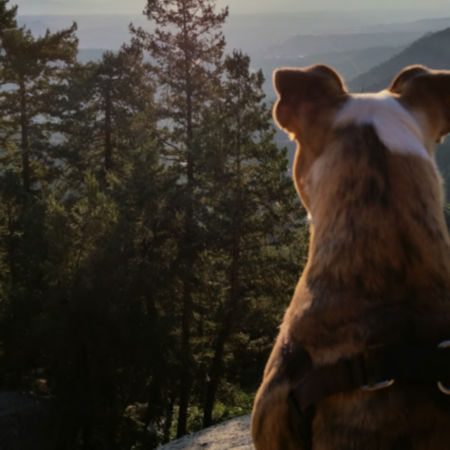 Back of a dog head from the top of a mountain