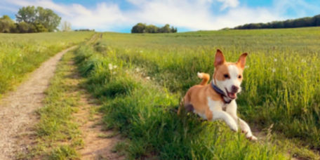 Adorable dog happily running on a dirt path