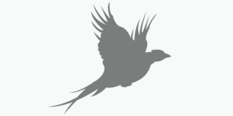 An alert bird dog standing in the water gets a pat on the head.