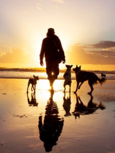Walking on a beach with several dogs in the sunset