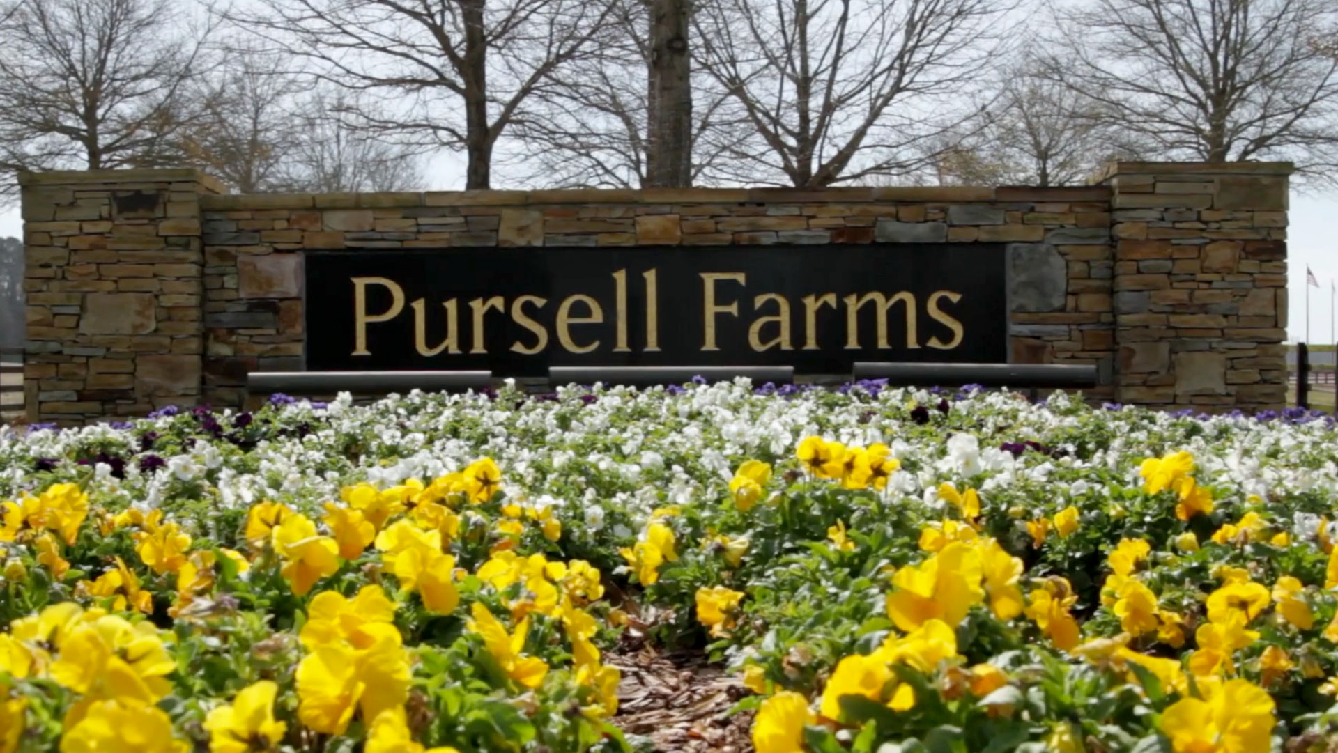 Pursell Farms sign nestled in a garden of flowers